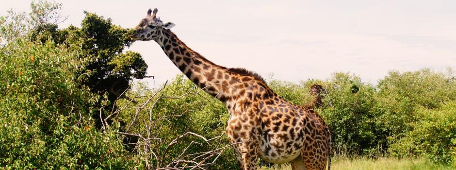 坦桑尼亚6